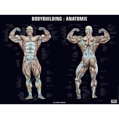 Planche anatomique bodybuilding (poster)