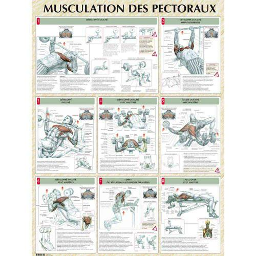Musculation des pectoraux (poster)