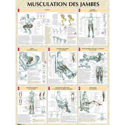 Musculation des jambes (poster)