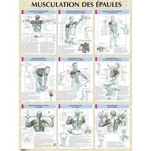 Musculation des épaules (poster)