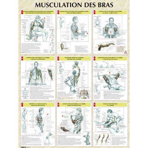 Musculation des bras (poster)