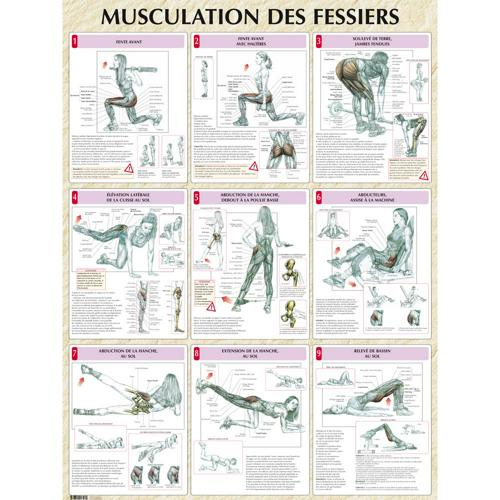 Musculation des fessiers (poster)